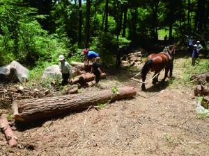 馬の名は「ヤマト」。現在、クラウドファンディングを実施中です。 ※写真提供 柳沢林業